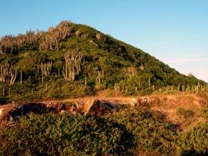 cactos e montanha