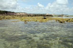 corais_em_pipa