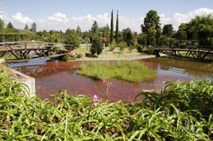 lago_no_jardim_botanico