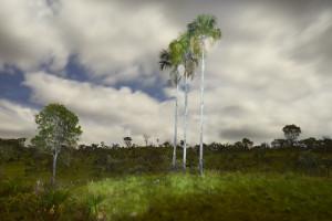 foto noturna palmeira iluminada por lanterna