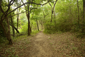 trilha para a cachoeira pandeiros