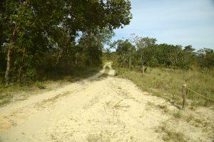 estrada-no-grande-sertao-veredas